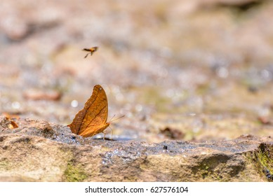 soft blurred focus the butterfly in nature.