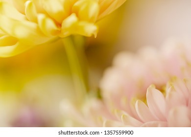 Soft blurred pink and yellow flowers.
