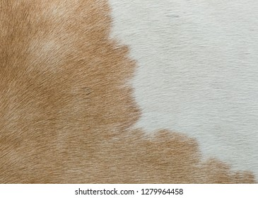 soft Brown and white horse hair overlapping each other to be used as a background