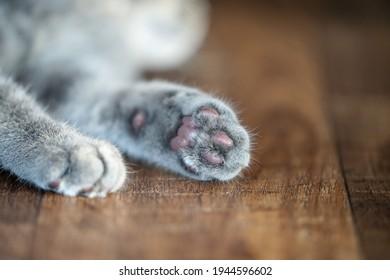 soft cat paw on the floor