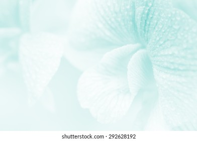 Soft color of close up orchid in soft and blur style for background design