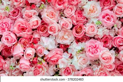 Unduh 5500 Koleksi Background Pink Rose HD Terbaik