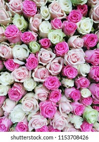 Soft color Roses Background. Colorful roses background wallpaper