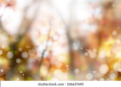 Soft colors in a forest