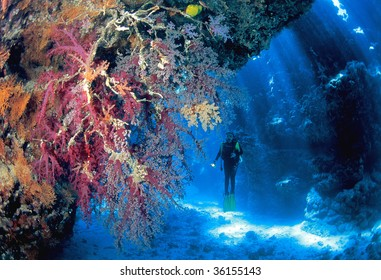 Soft corals and diver in front of sun rays