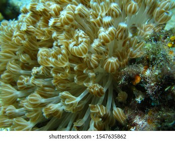 Soft corals pulse as they attempt to grab food from the water around them