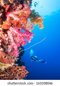Soft corals with variying colors with a scuba diver in the background