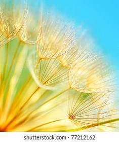 Soft dandelion flowers macro border over sky blue background