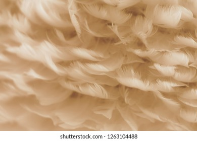Soft feathers in colorful texture background.