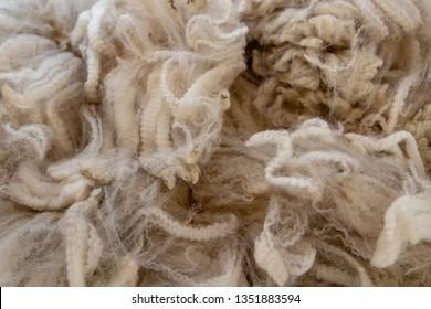 The soft, fine and warm fleece from a shorn alpaca