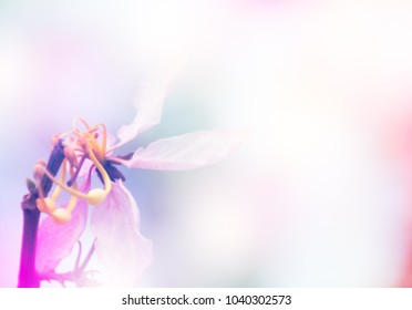 Soft flower background for card with copy space for texts