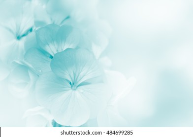 Soft flower background, made with color filters, unfocused
