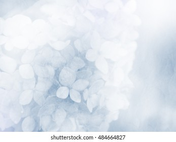 Soft flower background, unfocused, made with color filters