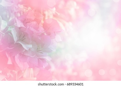 soft flower Bougainvillea vintage with filter background,copy space