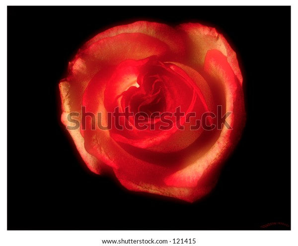 The soft flower with red leafs