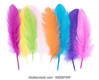 soft fluffy bird feather isolated on white background