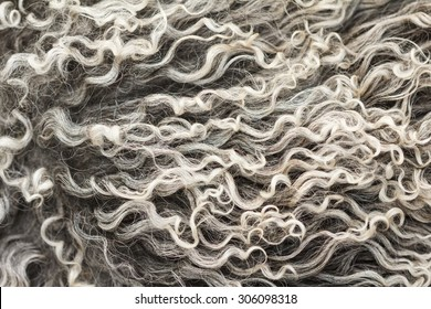 Soft and fluffy sheepskin - wool. Closeup background