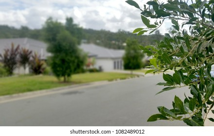 Soft Focus Background of Australian Suburb, South East Queensland