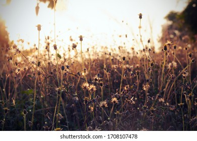 Soft focus background grass flowers in the morning sunlight