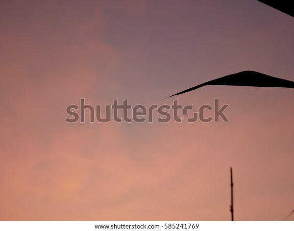 soft focus bamboo , blade of grass with peach sky in winter