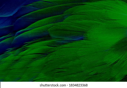 Soft focus beautiful dark green viridian vintage color trends feather texture background