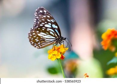 Royalty Free Butterfly Flower Stock Images Photos Vectors