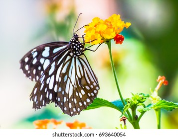 Soft focus. Butterfly on flowers , beautiful butterfly & flower in the garden ,Close Up butterfly on flower.