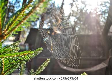 Soft focus cobweb on tree branches