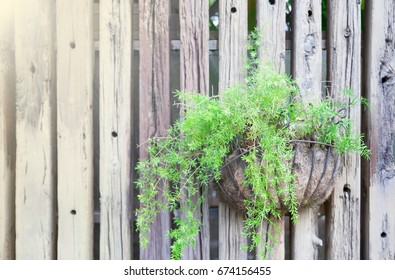 Soft focus of Creepers in handmade pots hang alongside wooden fences, gardening concept or design.