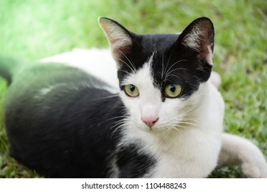 Soft focus. Cute black and white cat looking for.
