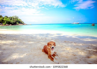 Soft focus to Dog at the beach ocean shore, on summer vacation holidays. Under the bright sun  with nice clear blue sky sea and sand on lipe beach thailand for nature background.