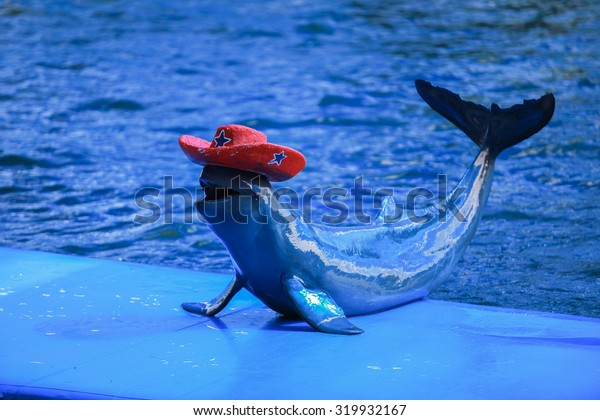 soft focus of Dolphin showing