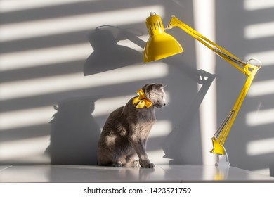 Soft focus fashion portrait of purebreed russian blue cat with decorative yellow bowtie over neck on table with lamp. Light and shadow falling through blinds on wall behind. Pussycat in home interior