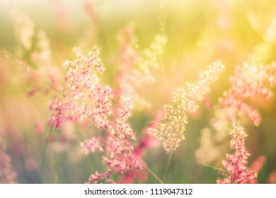 soft focus filtered background,nature grass flower field yellow background with morning sunlight.