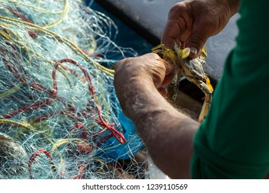 Soft focus of Fisherman hands take Blue swimming crab off fishing nets, Thailand