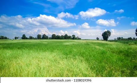 Soft focus of fresh nature green grass with clear blue sky background in countryside thailand for natural background.