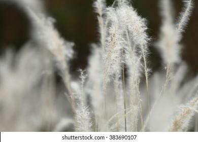 soft focus of grass