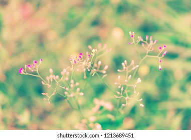 Soft focus Grass Flower  abstract autumn ,spring ,nature relax wallpaper   background