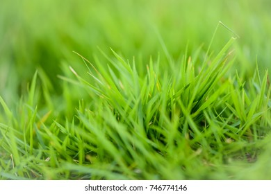 Soft focus grass in yellow sunlight. Background concept.