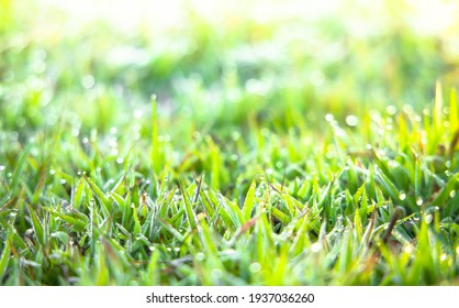 Soft focus Green grass with sunlight from a field nature background. Easter day backdrop.