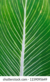 soft focus, green leaf background