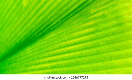 soft focus green leaf nature  abstract nature wallpaper  background