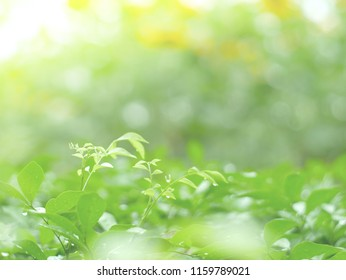 soft focus, green leafs background and abstrack texture for wallpaper