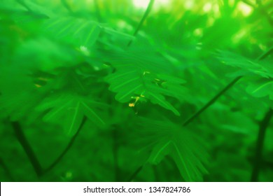 Soft focus   green leaves spring nature wallpaper background