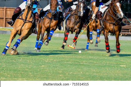 Soft focus Horses and Polo player on the polo match.