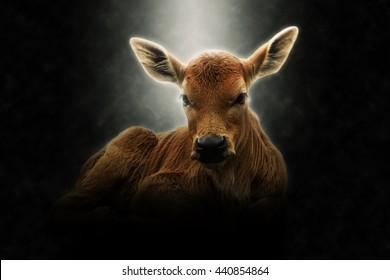 Soft focus image of A calf.