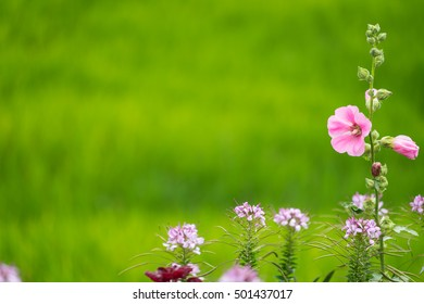 Soft focus image of pink flowers with green background space