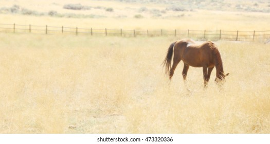 A soft focus image of a sorrel horse grazing in a grassy meadow.