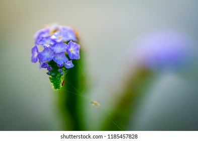 soft focus macro shot of beautiful wild flowers with shallow depth of field