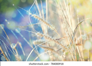 soft focus of meadow flowers and nature bokeh background